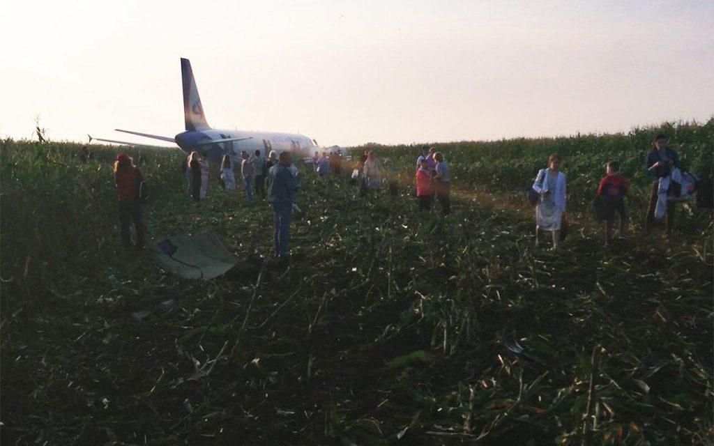 Просеката, оставена от А321 в царевицата. Самолетът е приземен аварийно без спуснат колесник